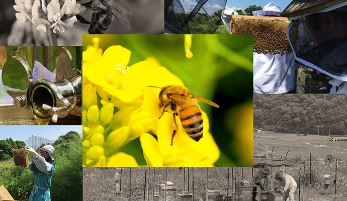 【3月開講/養蜂アカデミー】趣味からはじめる週末養蜂アカデミー千葉校・神奈川校(全8回)