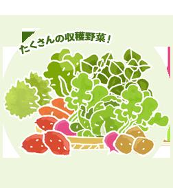 たくさんの収穫野菜