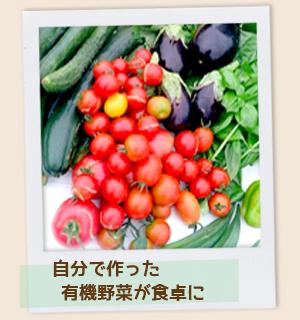 体験農園マイファーム6つのポイント 自分で作った有機野菜が食卓に