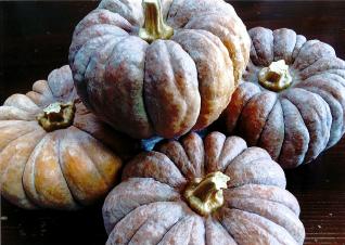 日本かぼちゃ1