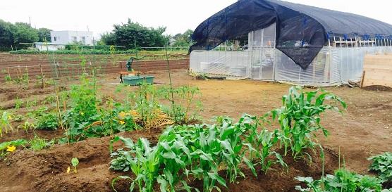 習志野実籾農園