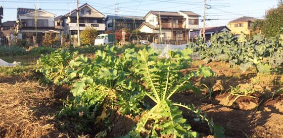 横浜町田農園