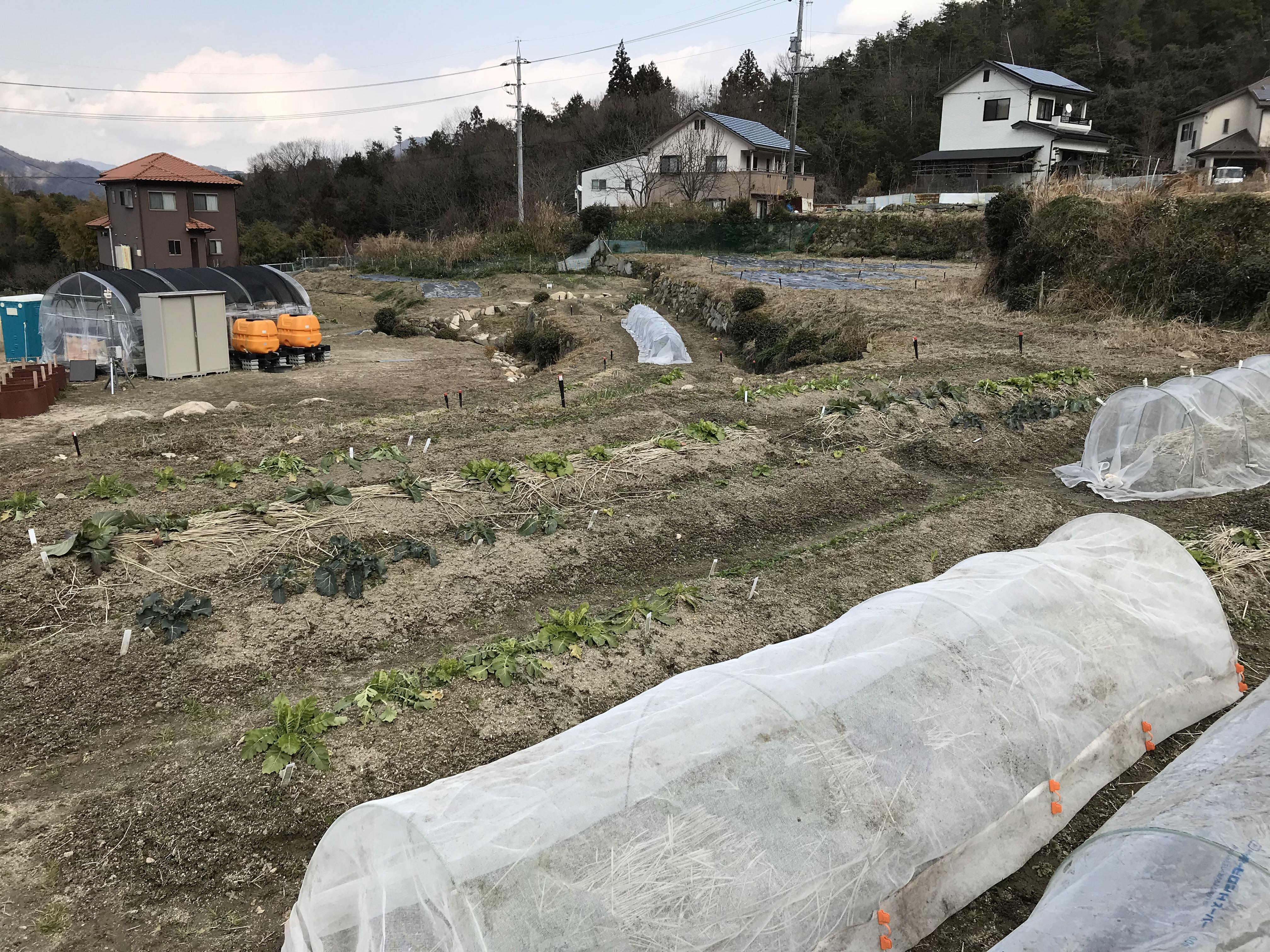 エネコム体験農園 高取第1農園