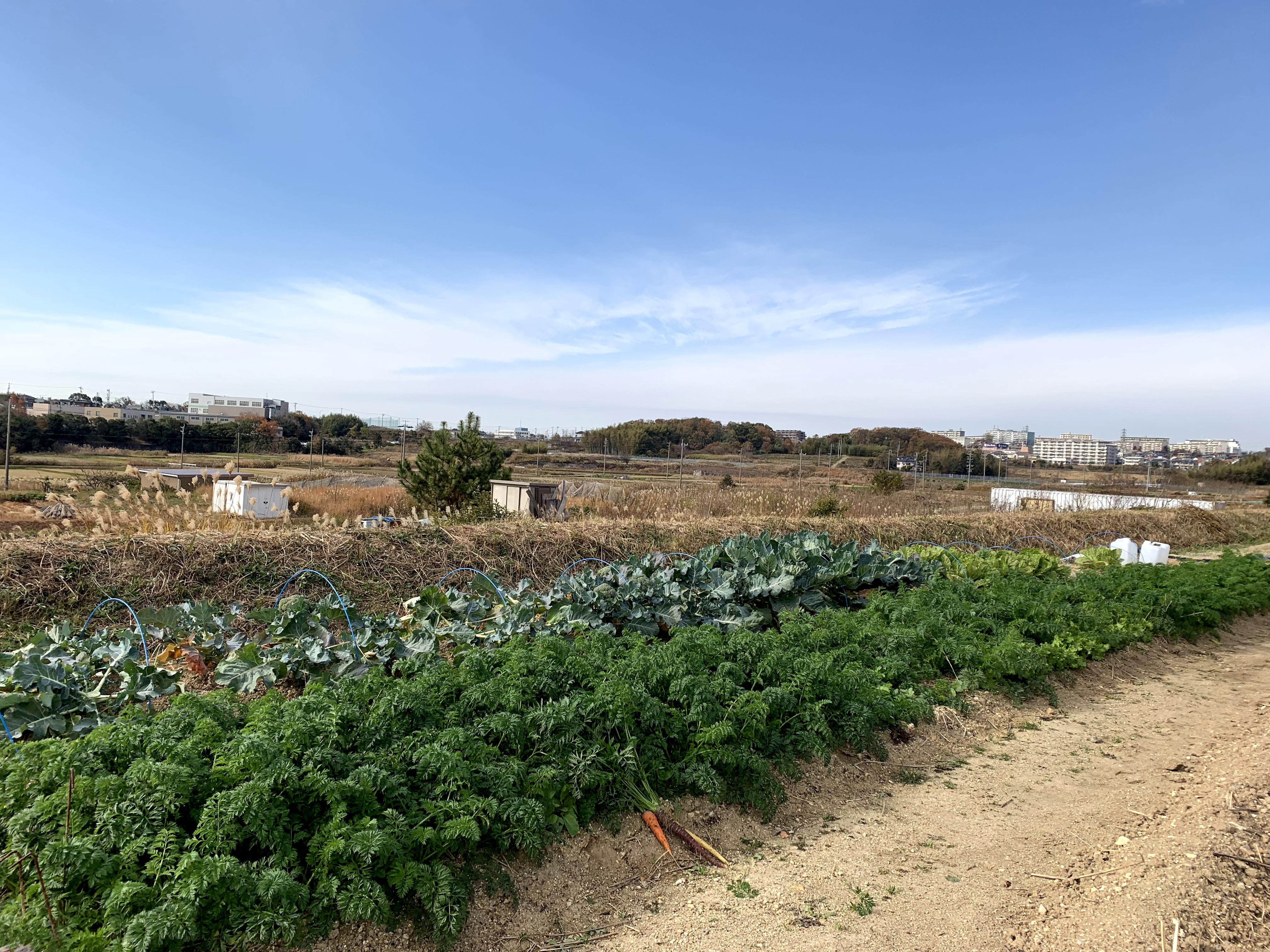 愛知東郷農園